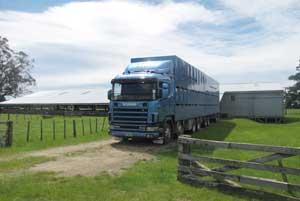 Livestock-Trucking-2