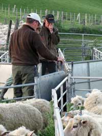 Livestock-Services-1